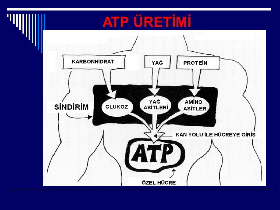 ATP ÜRETİMİ
