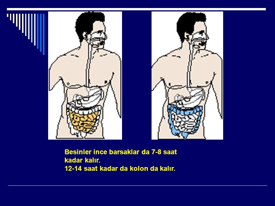 Besinler ince barsaklar da 7-8 saat kadar kalır. 12-14 saat kadar da kolon da kalır.