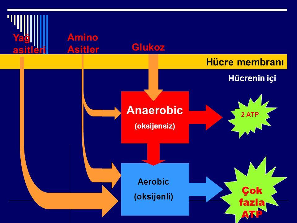 Yağ asitleri Amino Asitler Glukoz Aerobic (oksijenli) Anaerobic (oksijensiz) Hücre membranı Çok fazla ATP 2 ATP Hücrenin içi