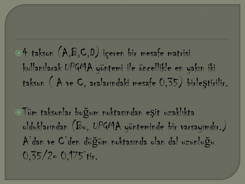  4 takson (A,B,C,D) içeren bir mesafe matrisi kullanılarak UPGMA yöntemi ile öncellikle en yakın iki takson ( A ve C, aralarındaki mesafe 0,35) birle