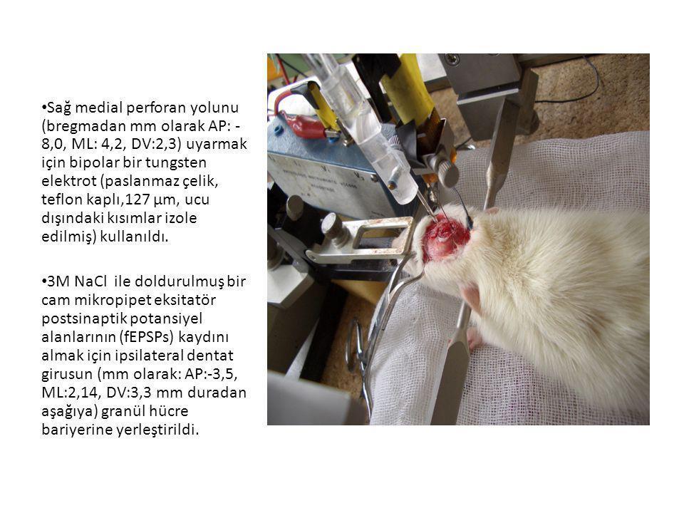 • Sağ medial perforan yolunu (bregmadan mm olarak AP: - 8,0, ML: 4,2, DV:2,3) uyarmak için bipolar bir tungsten elektrot (paslanmaz çelik, teflon kapl