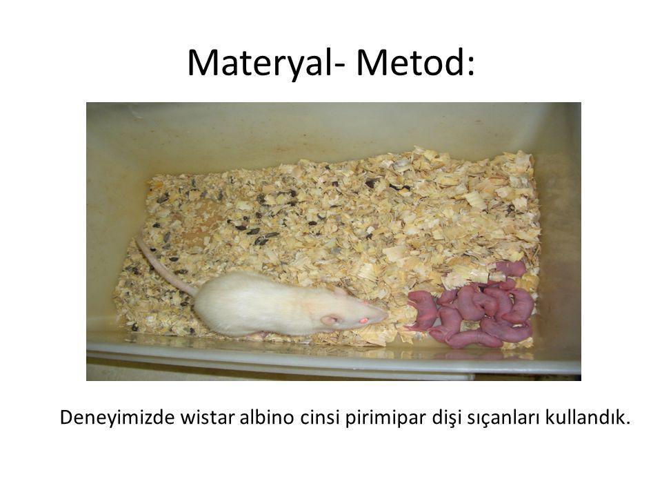 Materyal- Metod: Deneyimizde wistar albino cinsi pirimipar dişi sıçanları kullandık.