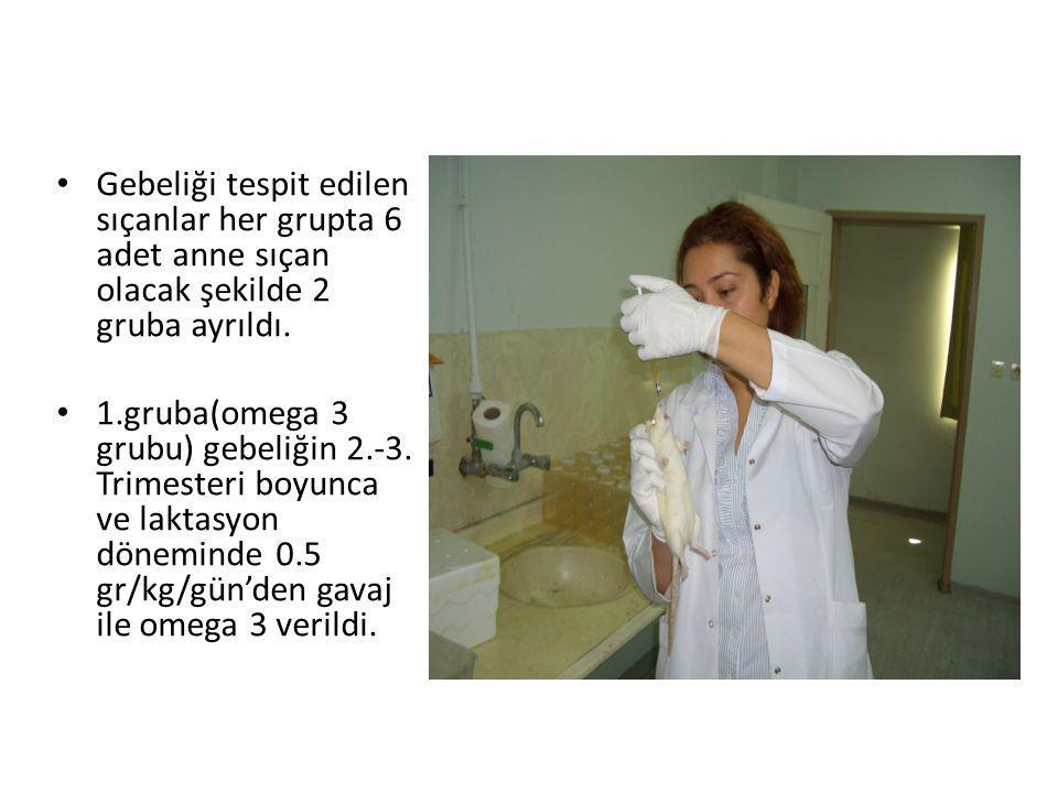 • Gebeliği tespit edilen sıçanlar her grupta 6 adet anne sıçan olacak şekilde 2 gruba ayrıldı. • 1.gruba(omega 3 grubu) gebeliğin 2.-3. Trimesteri boy