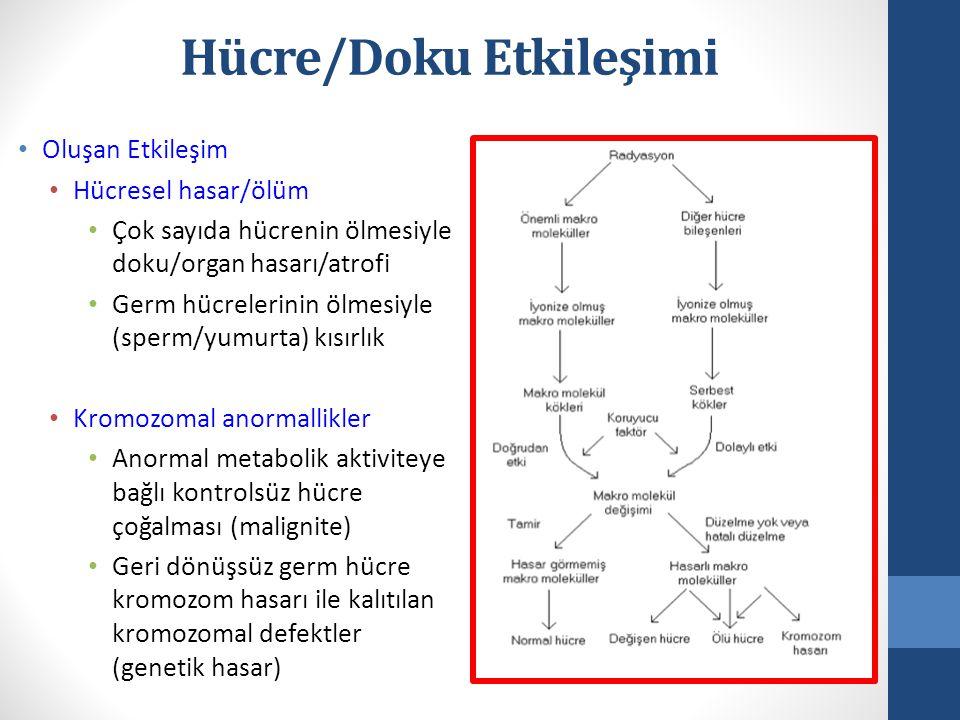 • Oluşan Etkileşim • Hücresel hasar/ölüm • Çok sayıda hücrenin ölmesiyle doku/organ hasarı/atrofi • Germ hücrelerinin ölmesiyle (sperm/yumurta) kısırlık • Kromozomal anormallikler • Anormal metabolik aktiviteye bağlı kontrolsüz hücre çoğalması (malignite) • Geri dönüşsüz germ hücre kromozom hasarı ile kalıtılan kromozomal defektler (genetik hasar) Hücre/Doku Etkileşimi
