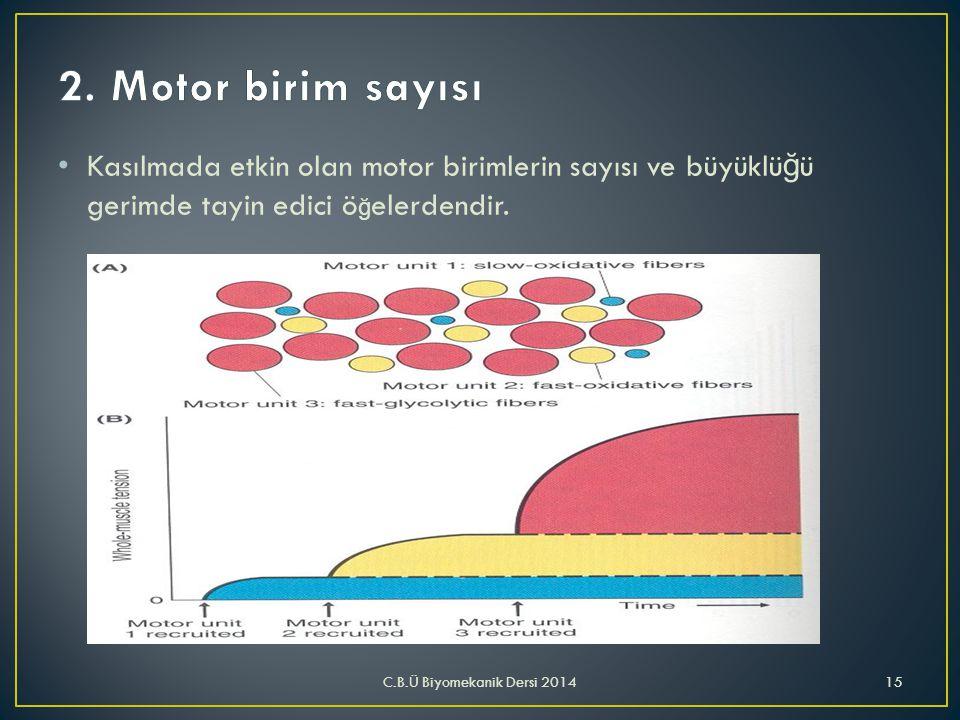 • Kasılmada etkin olan motor birimlerin sayısı ve büyüklü ğ ü gerimde tayin edici ö ğ elerdendir. C.B.Ü Biyomekanik Dersi 201415