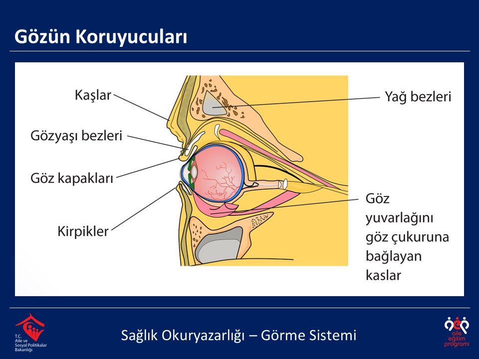 Gözün Koruyucuları Sağlık Okuryazarlığı – Görme Sistemi