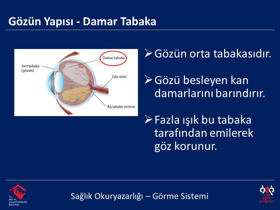 Gözün Yapısı - Damar Tabaka Sağlık Okuryazarlığı – Görme Sistemi  Gözün orta tabakasıdır.  Gözü besleyen kan damarlarını barındırır.  Fazla ışık bu
