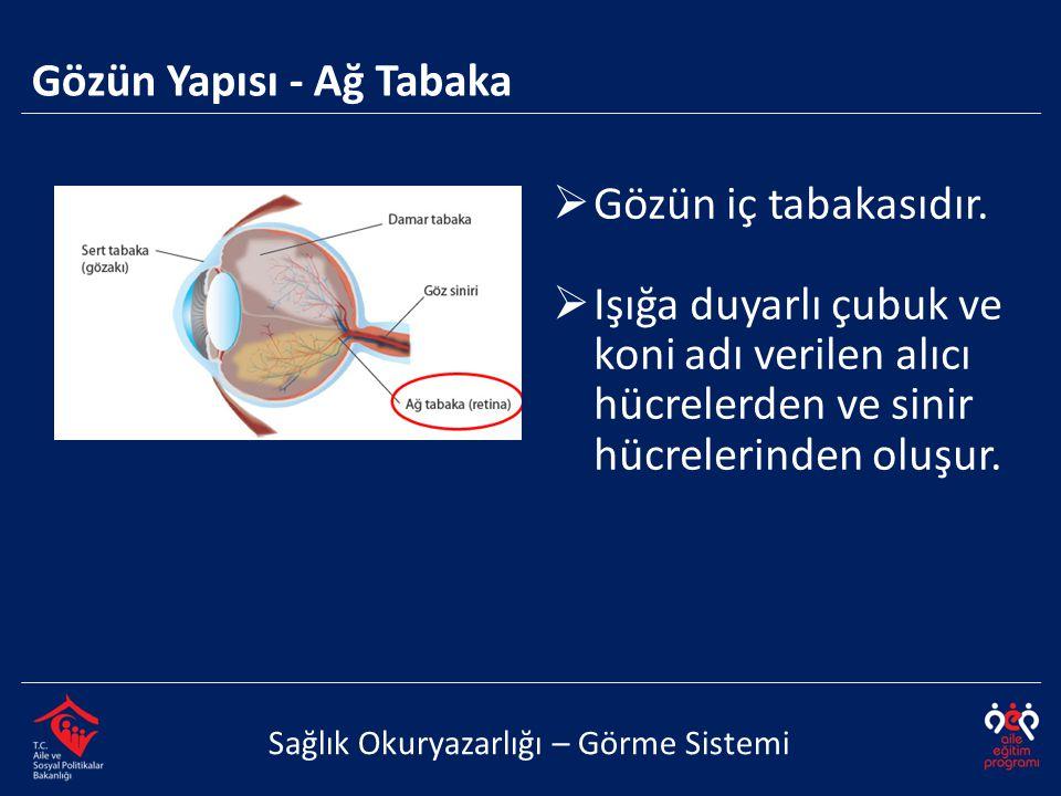 Gözün Yapısı - Ağ Tabaka Sağlık Okuryazarlığı – Görme Sistemi  Gözün iç tabakasıdır.  Işığa duyarlı çubuk ve koni adı verilen alıcı hücrelerden ve s