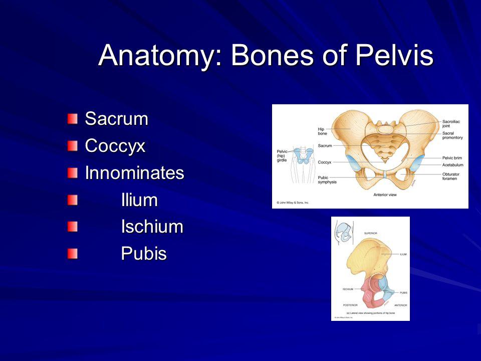 Anatomy: Bones of Pelvis SacrumCoccyxInnominates Ilium Ilium Ischium Ischium Pubis Pubis