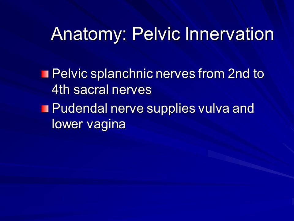 Anatomy: Perineum ClitorisUrethraVaginaAnus Labia majora and minora Bartholin's and Skene's glands Hymen
