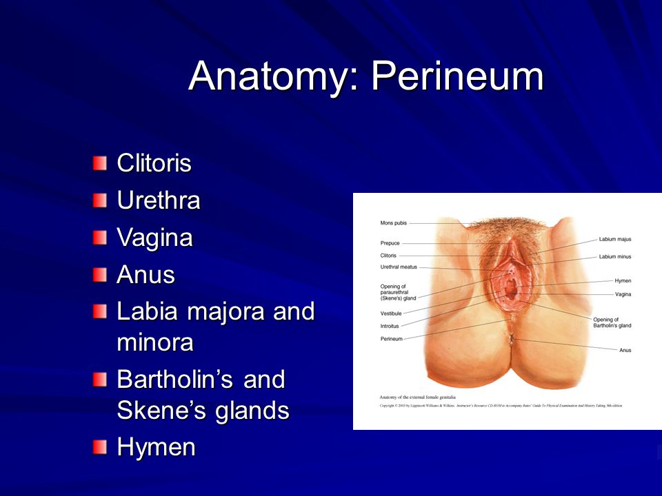 Anatomy: Pelvic Organs Fallopian tubes- isthmus, ampulla, infundibulum, fimbriae Cervix-endocervix, ectocervix, internal and external os, endocervical canal Vagina and fornices