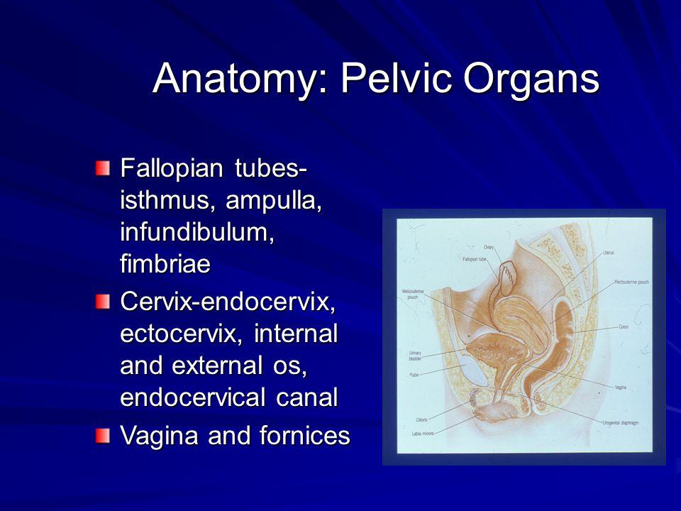 Pozisyon presente olan parçadaki önde gelen bölge ile maternal pelvisteki önde gelen lokalizasyon arasındaki bağlantıdır.