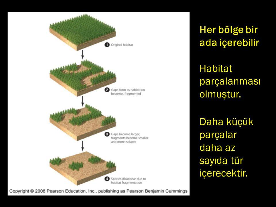 Her bölge bir ada içerebilir.. Habitat parçalanması olmuştur. Daha küçük parçalar daha az sayıda tür içerecektir.