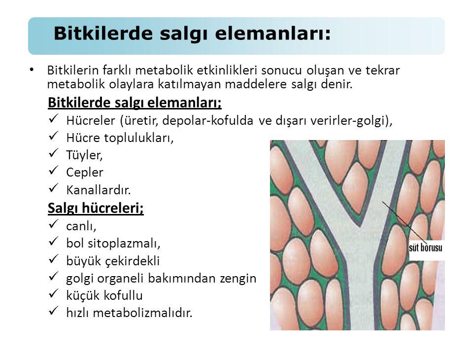 • Bitkilerin farklı metabolik etkinlikleri sonucu oluşan ve tekrar metabolik olaylara katılmayan maddelere salgı denir. Bitkilerde salgı elemanları; 
