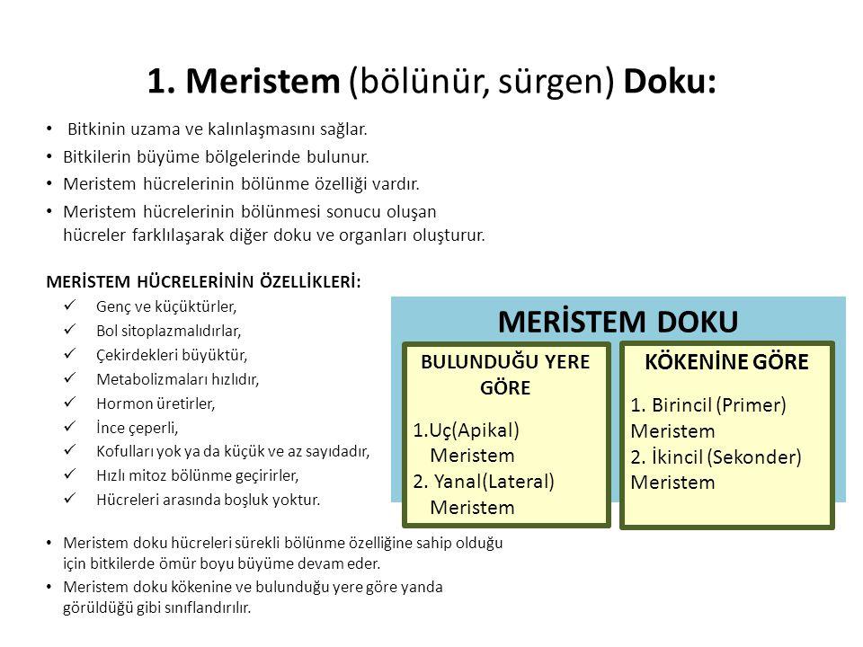 1. Meristem (bölünür, sürgen) Doku: • Bitkinin uzama ve kalınlaşmasını sağlar. • Bitkilerin büyüme bölgelerinde bulunur. • Meristem hücrelerinin bölün