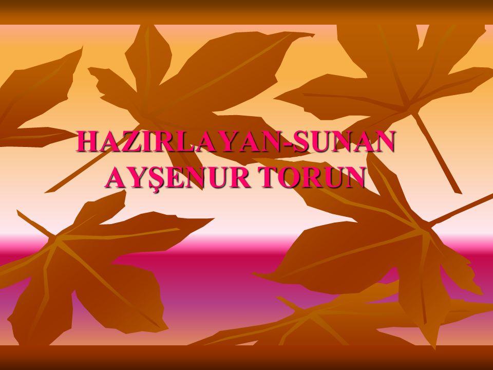 HAZIRLAYAN-SUNAN AYŞENUR TORUN