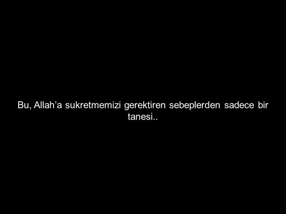 Bu, Allah'a sukretmemizi gerektiren sebeplerden sadece bir tanesi..