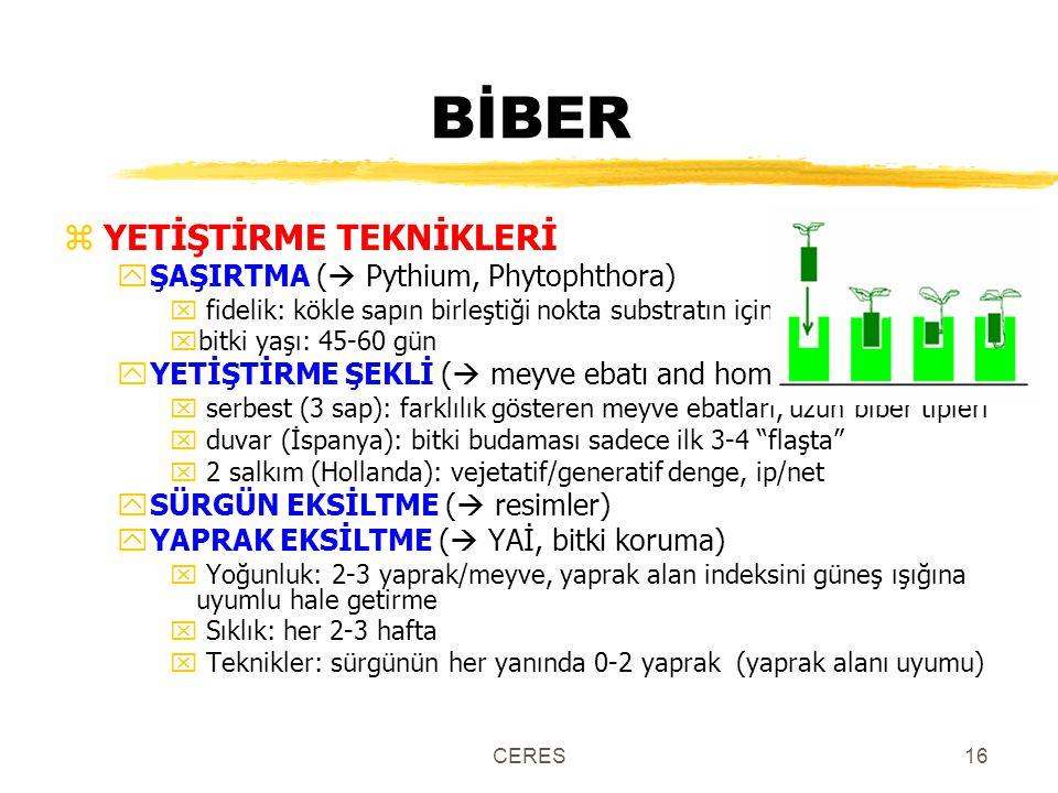 CERES16 BİBER zYETİŞTİRME TEKNİKLERİ yŞAŞIRTMA (  Pythium, Phytophthora) x fidelik: kökle sapın birleştiği nokta substratın içinde xbitki yaşı: 45-60