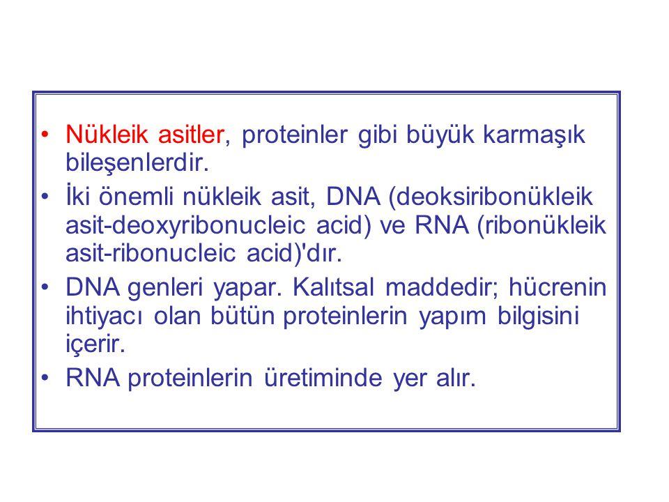 •Nükleik asitler, proteinler gibi büyük karmaşık bileşenlerdir.