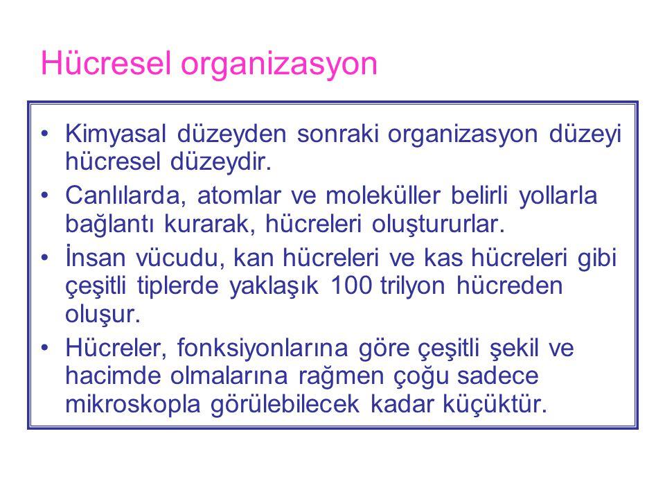 Dokular •Hücresel düzeyden sonra en üst düzey organizasyon doku düzeyidir.