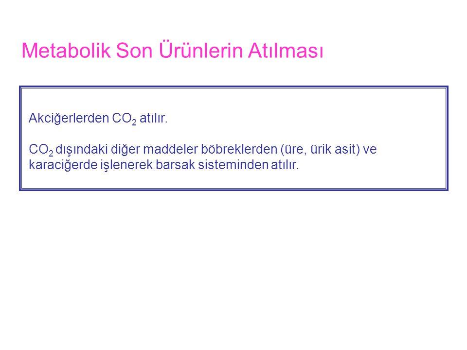 Metabolik Son Ürünlerin Atılması Akciğerlerden CO 2 atılır.