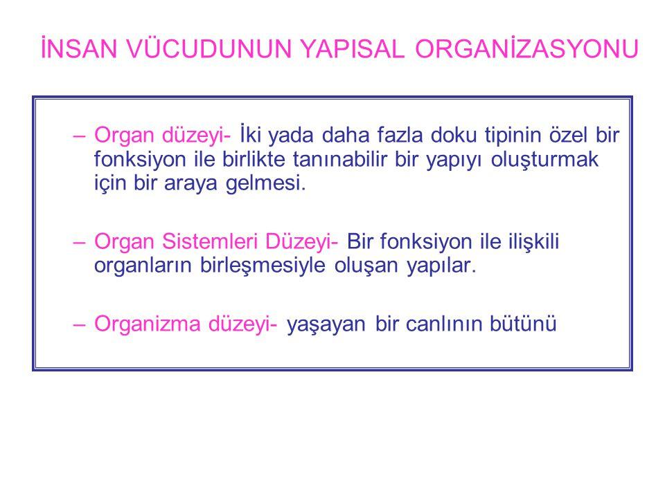 İNSAN VÜCUDUNUN YAPISAL ORGANİZASYONU –Organ düzeyi- İki yada daha fazla doku tipinin özel bir fonksiyon ile birlikte tanınabilir bir yapıyı oluşturmak için bir araya gelmesi.
