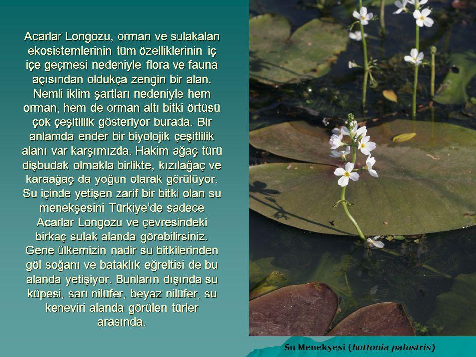 Acarlar Longozu, orman ve sulakalan ekosistemlerinin tüm özelliklerinin iç içe geçmesi nedeniyle flora ve fauna açısından oldukça zengin bir alan. Nem