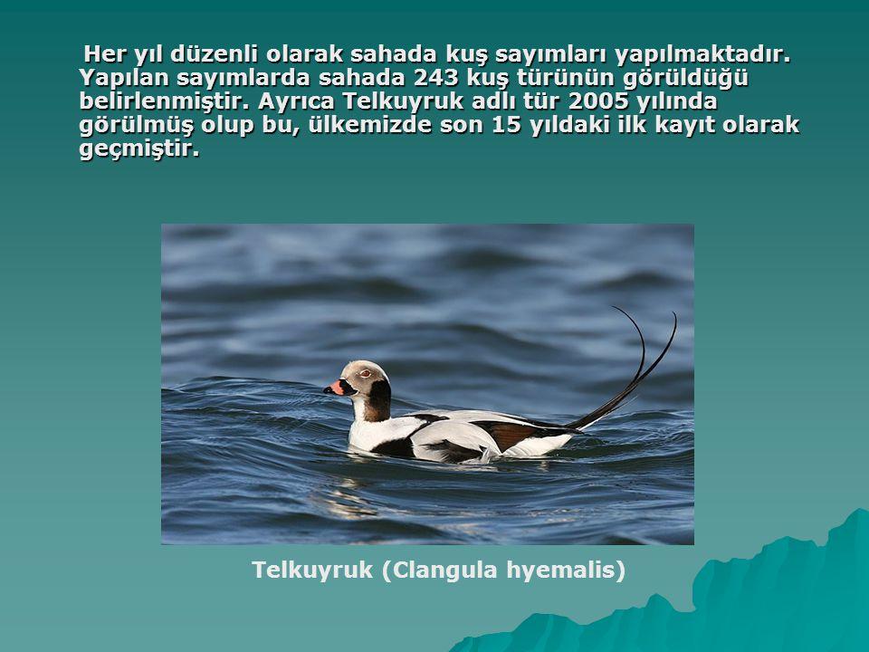 Her yıl düzenli olarak sahada kuş sayımları yapılmaktadır. Yapılan sayımlarda sahada 243 kuş türünün görüldüğü belirlenmiştir. Ayrıca Telkuyruk adlı t