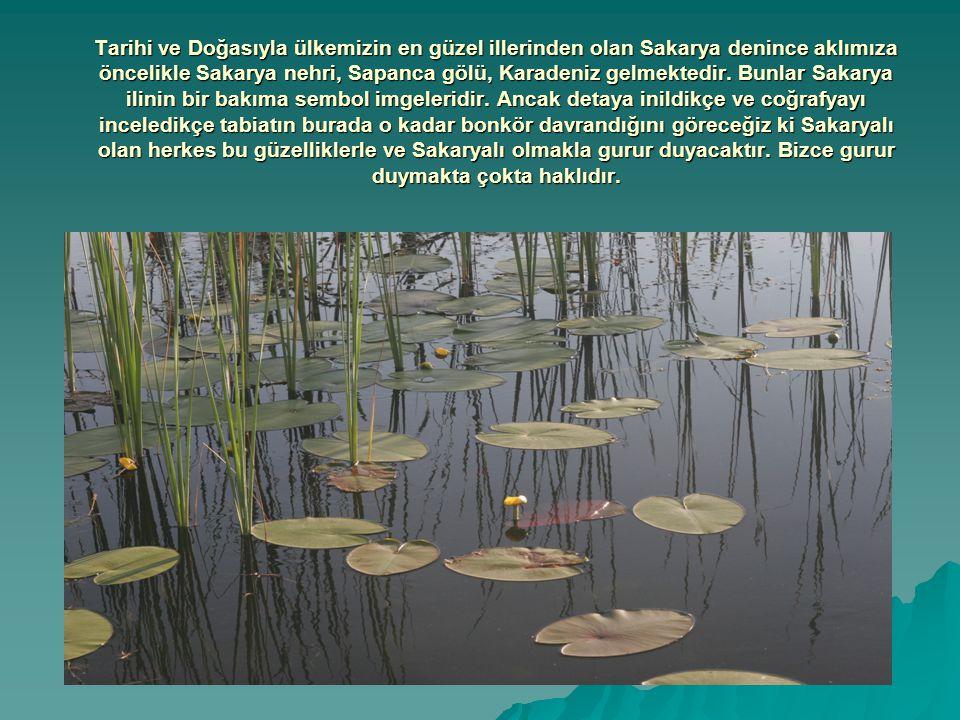Tarihi ve Doğasıyla ülkemizin en güzel illerinden olan Sakarya denince aklımıza öncelikle Sakarya nehri, Sapanca gölü, Karadeniz gelmektedir. Bunlar S