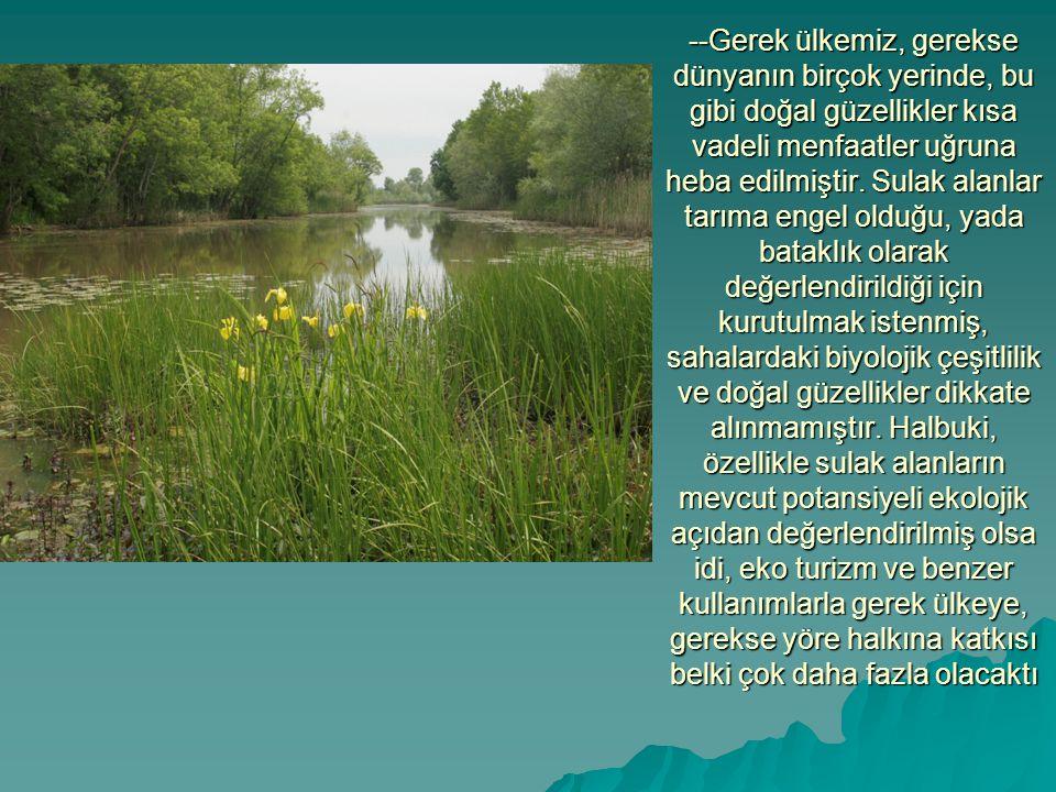 --Gerek ülkemiz, gerekse dünyanın birçok yerinde, bu gibi doğal güzellikler kısa vadeli menfaatler uğruna heba edilmiştir. Sulak alanlar tarıma engel