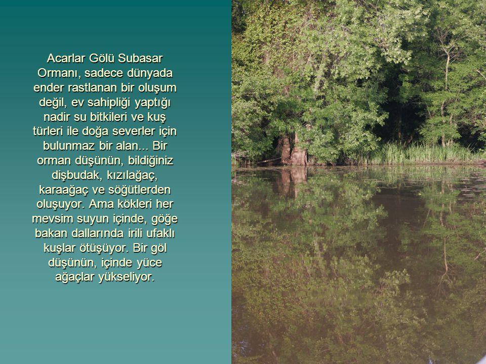 Acarlar Gölü Subasar Ormanı, sadece dünyada ender rastlanan bir oluşum değil, ev sahipliği yaptığı nadir su bitkileri ve kuş türleri ile doğa severler