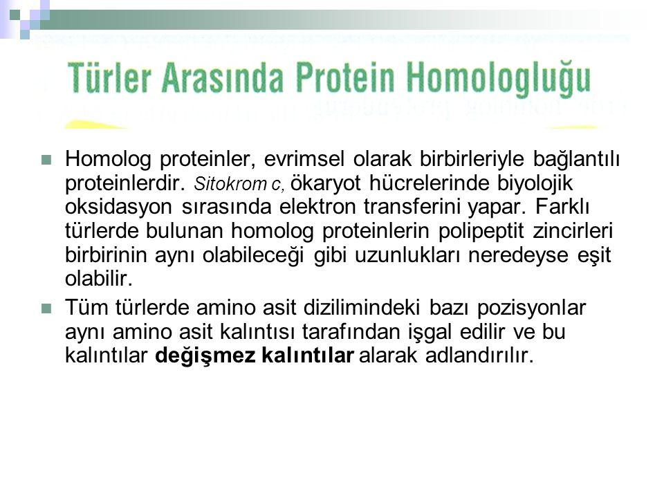  Homolog proteinler, evrimsel olarak birbirleriyle bağlantılı proteinlerdir. Sitokrom c, ökaryot hücrelerinde biyolojik oksidasyon sırasında elektron