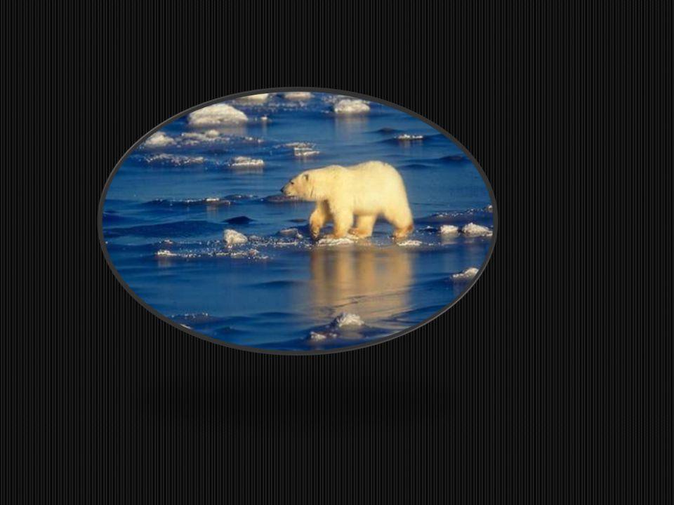 NEDENİ İklim sistemi içsel ve dışsal nedenlerden etkilenmektedir.