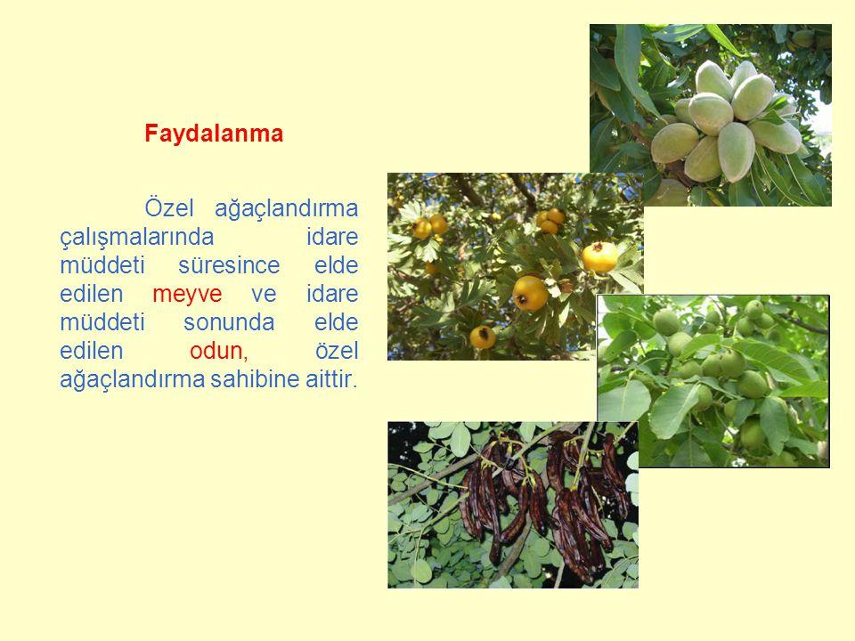 Faydalanma Özel ağaçlandırma çalışmalarında idare müddeti süresince elde edilen meyve ve idare müddeti sonunda elde edilen odun, özel ağaçlandırma sah