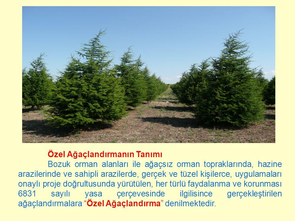 Özel Ağaçlandırmada Kullanılan Türler Devlet ormanı sayılan yerlerde;  Asli orman ürünü veren ağaç ve ağaççıklar,  Meyvesinden yararlanılan orman ağaç ve ağaççıkları,  Bu türlerin altında da tıbbi aromatik, yumrulu ve soğanlı bitkiler, Hazine arazilerinde ve sahipli arazilerde; Yukarıda belirtilen türlerin yanında,  Zeytin,  Alt tür olarak da tarım ürünleri, yetiştirilebilir.