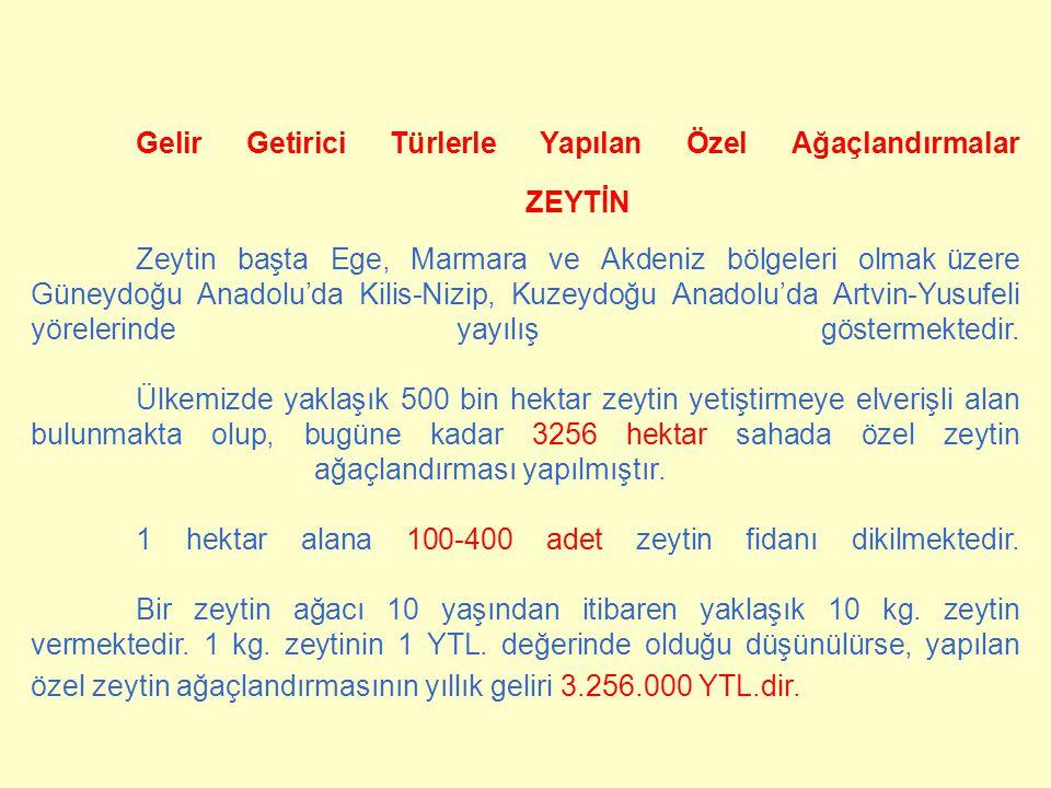 Gelir Getirici Türlerle Yapılan Özel Ağaçlandırmalar ZEYTİN Zeytin başta Ege, Marmara ve Akdeniz bölgeleri olmak üzere Güneydoğu Anadolu'da Kilis-Nizi