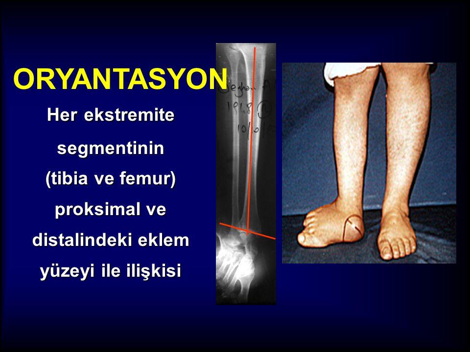 Her ekstremite segmentinin (tibia ve femur) proksimal ve distalindeki eklem yüzeyi ile ilişkisi ORYANTASYON