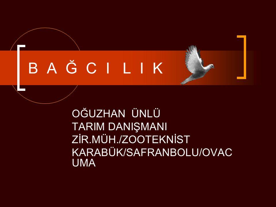 KÜLTÜR genel Türkiye, son derece eski ve köklü bir bağcılık kültürüne sahip bir bölge üzerindedir..Üzüm besin değeri yüksek bir meyve olup A, B, B2 ve C vitaminlerini içerir.
