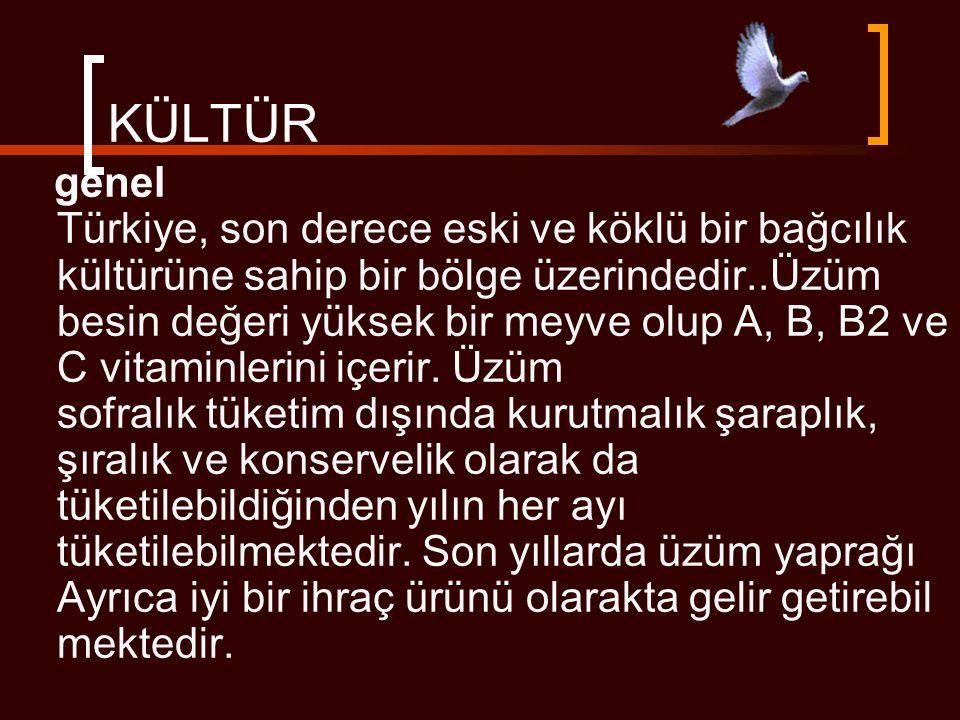 KÜLTÜR genel Türkiye, son derece eski ve köklü bir bağcılık kültürüne sahip bir bölge üzerindedir..Üzüm besin değeri yüksek bir meyve olup A, B, B2 ve