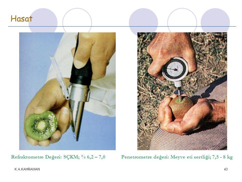 K.A.KAHRAMAN43 Hasat Refraktometre Değeri: SÇKM; % 6,2 – 7,0 Penetrometre değeri: Meyve eti sertliği; 7,5 - 8 kg
