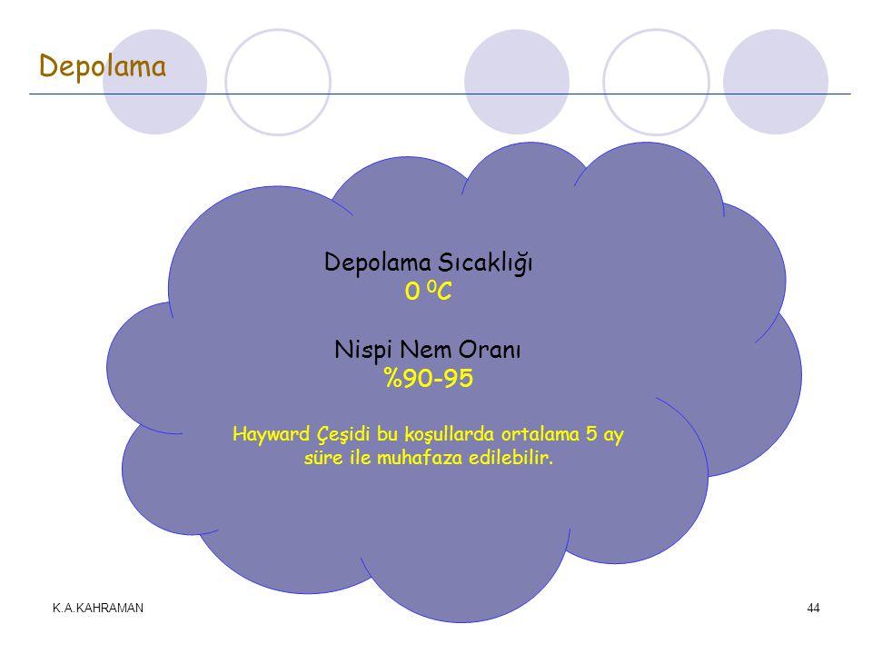 K.A.KAHRAMAN44 Depolama Depolama Sıcaklığı 0 0 C Nispi Nem Oranı %90-95 Hayward Çeşidi bu koşullarda ortalama 5 ay süre ile muhafaza edilebilir.
