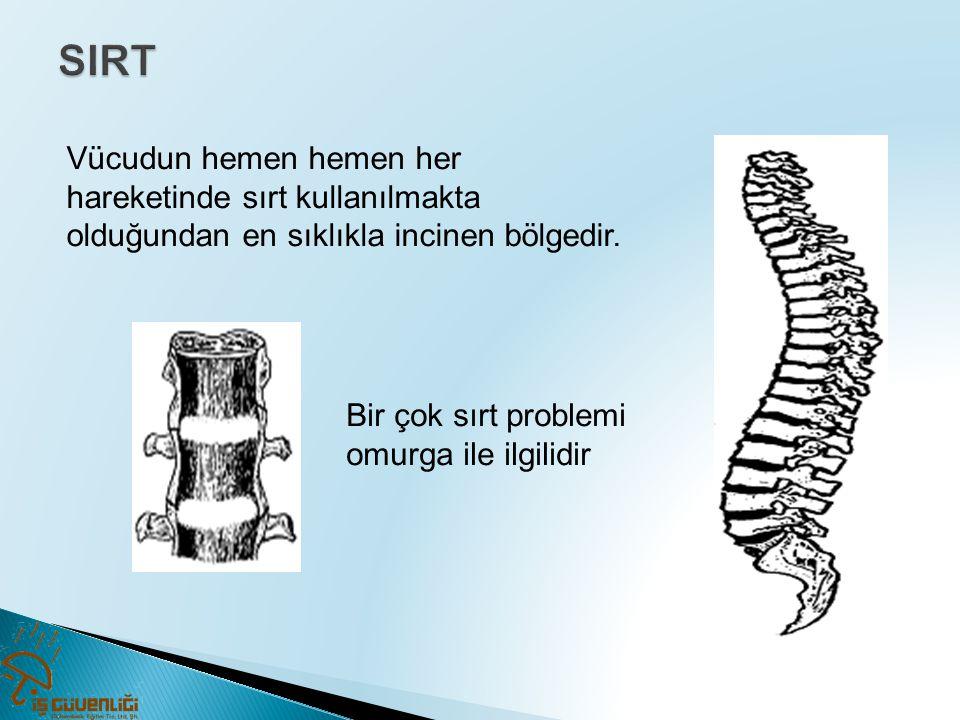 Vücudun hemen hemen her hareketinde sırt kullanılmakta olduğundan en sıklıkla incinen bölgedir. Bir çok sırt problemi omurga ile ilgilidir