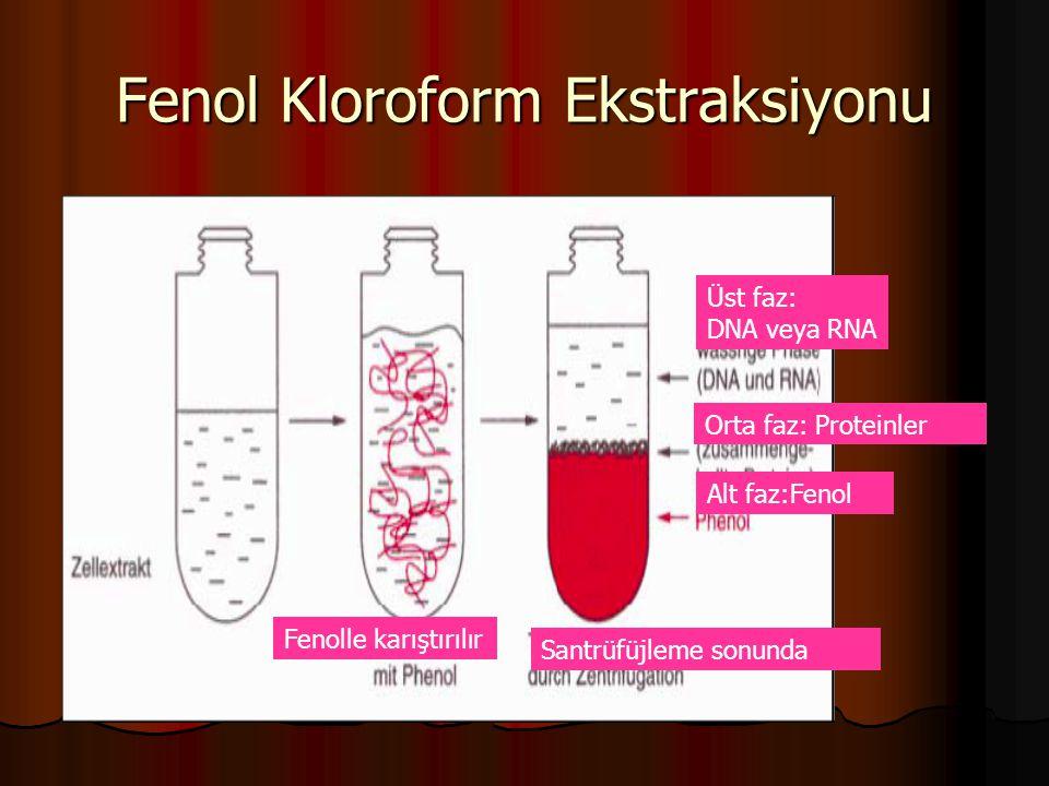Fenol Kloroform Ekstraksiyonu Fenolle karıştırılır Üst faz: DNA veya RNA Orta faz: Proteinler Alt faz:Fenol Santrüfüjleme sonunda