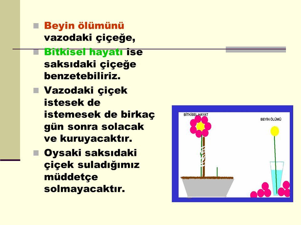  Beyin ölümünü vazodaki çiçeğe,  Bitkisel hayatı ise saksıdaki çiçeğe benzetebiliriz.  Vazodaki çiçek istesek de istemesek de birkaç gün sonra sola