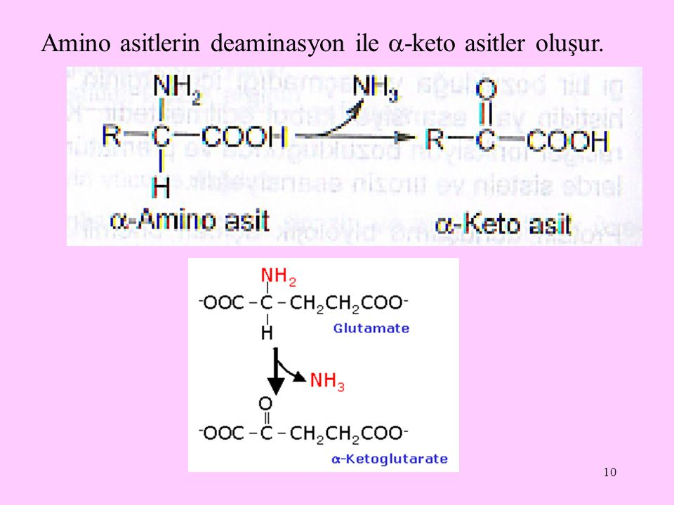 10 Amino asitlerin deaminasyon ile  -keto asitler oluşur.