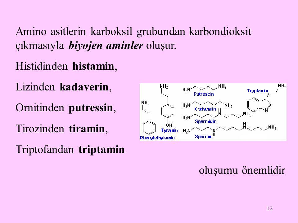12 Amino asitlerin karboksil grubundan karbondioksit çıkmasıyla biyojen aminler oluşur.