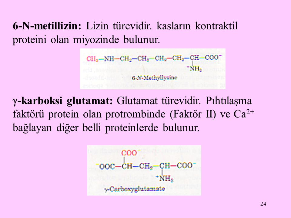 24 6-N-metillizin: Lizin türevidir. kasların kontraktil proteini olan miyozinde bulunur.  -karboksi glutamat: Glutamat türevidir. Pıhtılaşma faktörü
