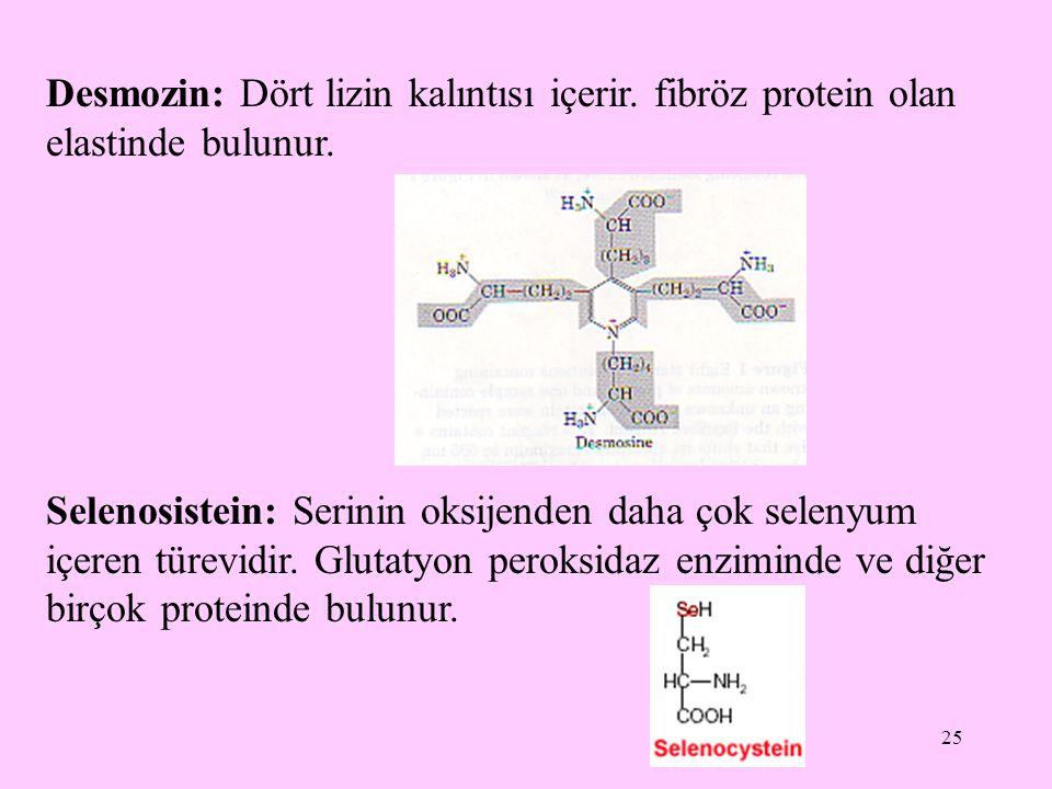 25 Desmozin: Dört lizin kalıntısı içerir. fibröz protein olan elastinde bulunur. Selenosistein: Serinin oksijenden daha çok selenyum içeren türevidir.