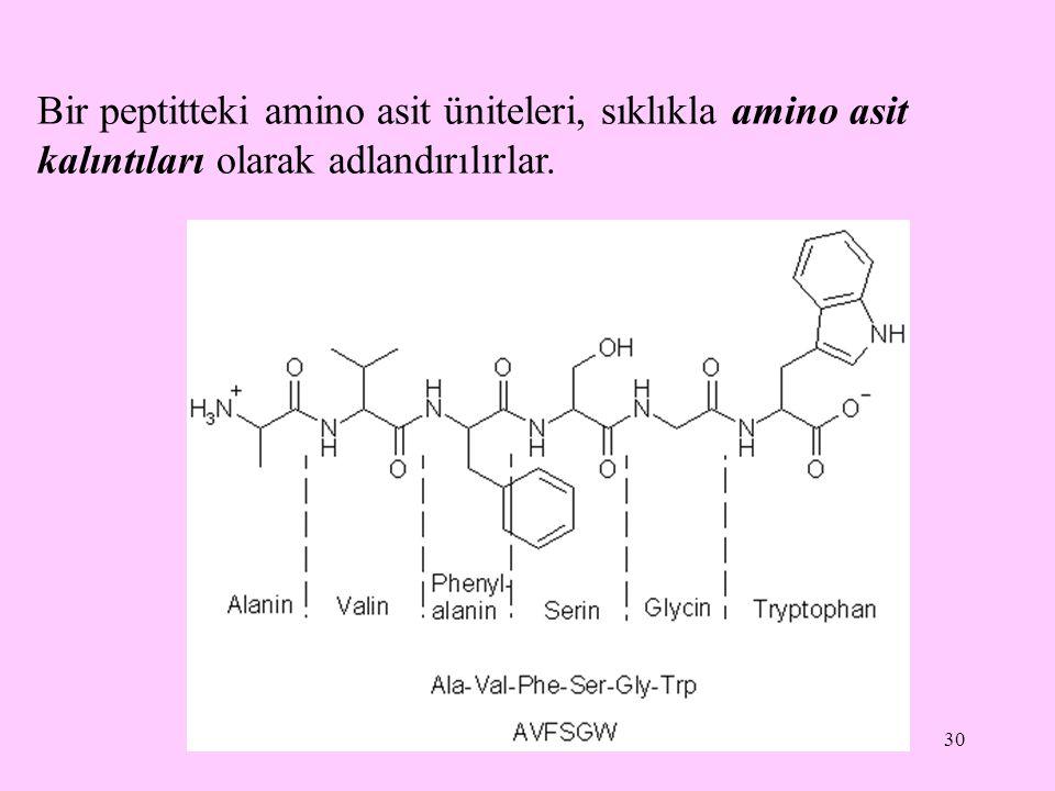 30 Bir peptitteki amino asit üniteleri, sıklıkla amino asit kalıntıları olarak adlandırılırlar.