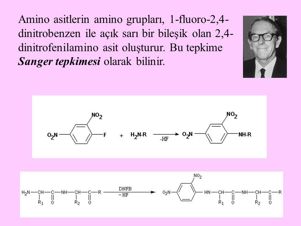 7 Amino asitler, nitröz asitle reaksiyona girerek azot gazı açığa çıkmasına neden olurlar.